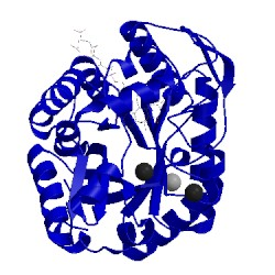Image of CATH 1rhc