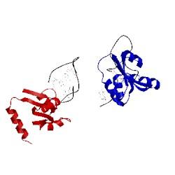 Image of CATH 1rlg