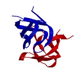 Image of CATH 1shf